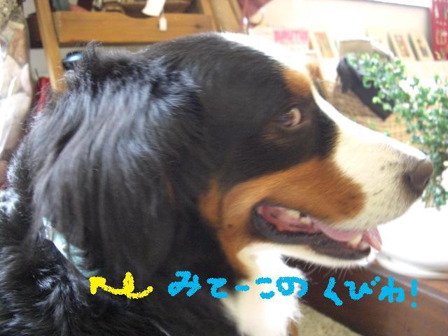 b0137064_20112887.jpg