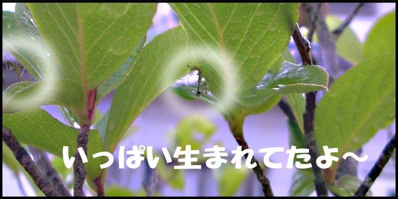 f0119369_1052552.jpg