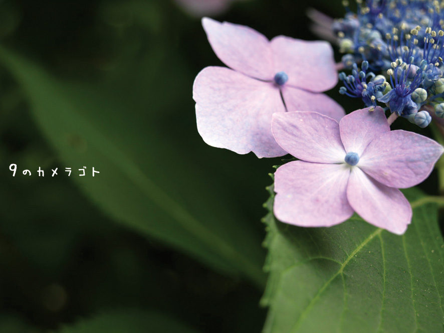 f0157679_0422611.jpg