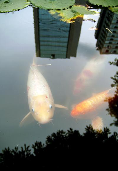 東京ドーム2周分_d0028499_16394441.jpg