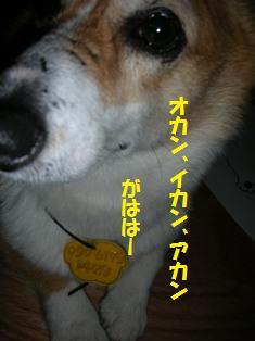 d0104705_1038399.jpg