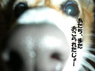 d0104705_10474442.jpg