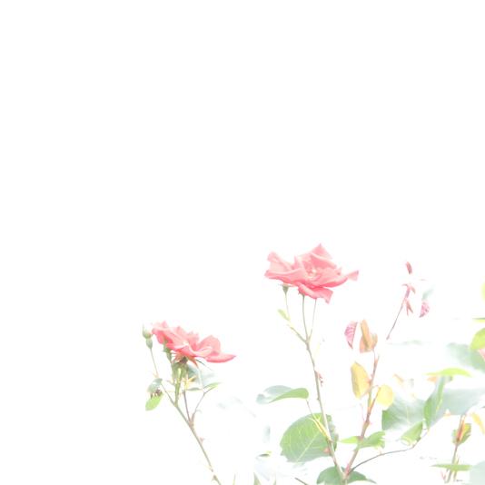 f0164442_2025087.jpg