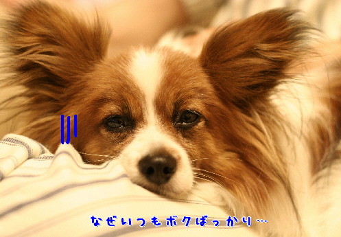 d0013149_737128.jpg