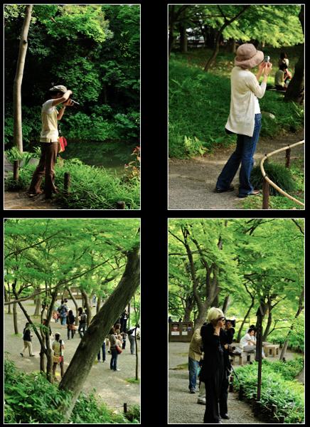 水無月の午後、花菖蒲の庭へ_a0003650_11144038.jpg