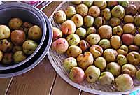 今年もやってきた杏の季節_e0130953_17404928.jpg