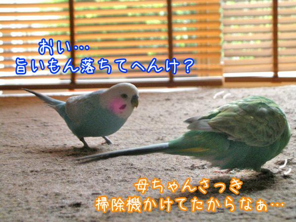f0132055_8262145.jpg