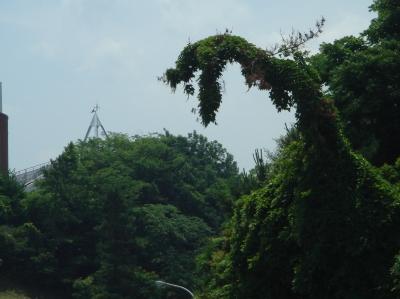 うみべの森を育てる会「会報15号」編集打合せ  in  せんなん里海公園_c0108460_20192616.jpg