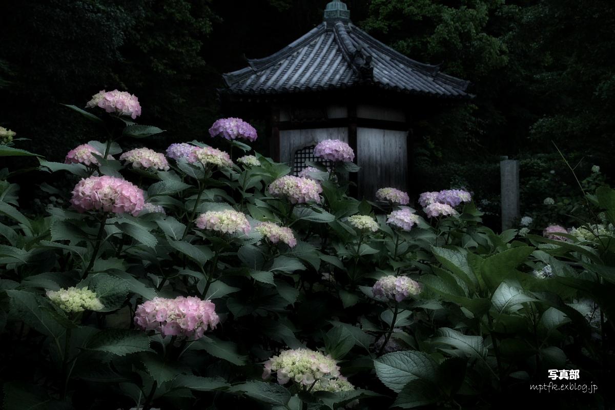 奈良 矢田寺 <紫陽花>  3_f0021869_14355589.jpg
