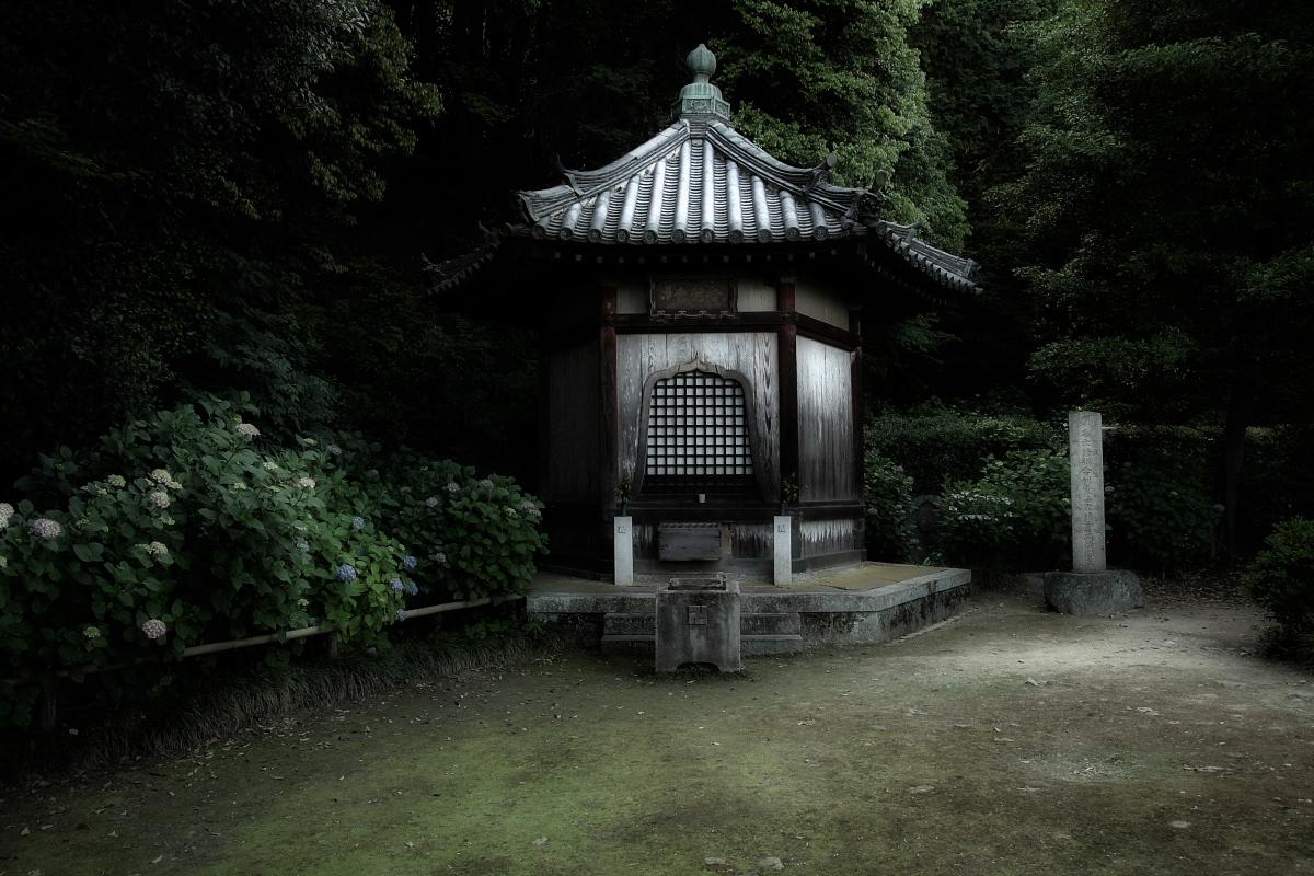 奈良 矢田寺 <紫陽花>  3_f0021869_14372192.jpg