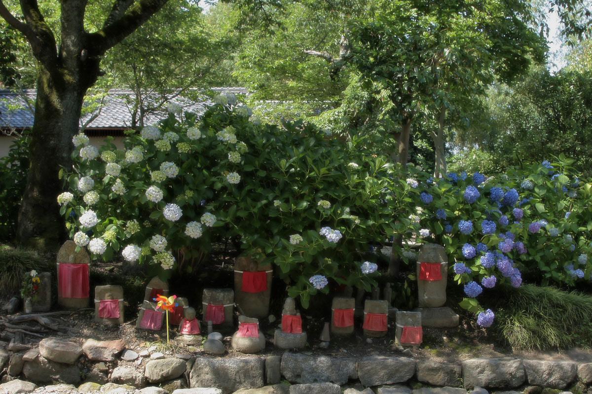 奈良 矢田寺 <紫陽花>  3_f0021869_14381048.jpg
