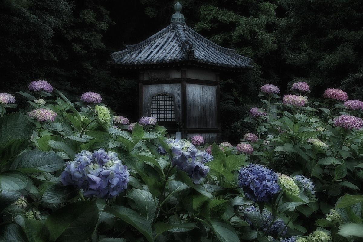 奈良 矢田寺 <紫陽花>  3_f0021869_1439991.jpg
