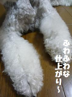 f0157373_17331019.jpg