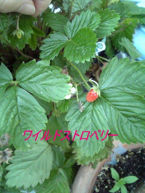 f0009481_805598.jpg