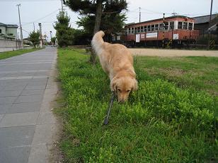 6月16日 お散歩_e0136815_23302482.jpg
