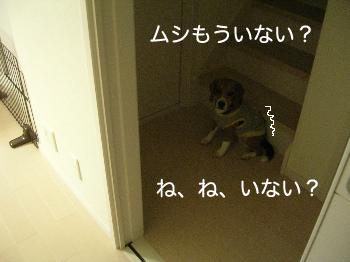 b0104420_21482092.jpg