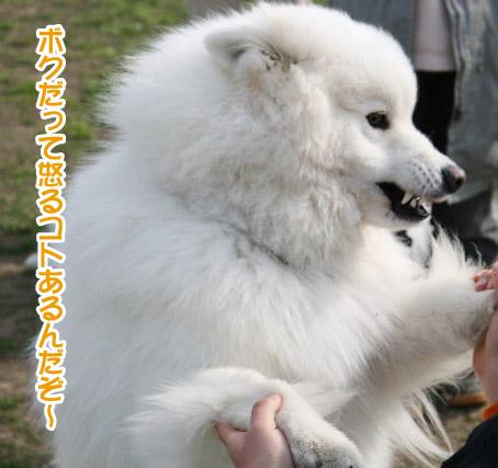 獅子丸5歳になりました〜!_a0044521_0522480.jpg