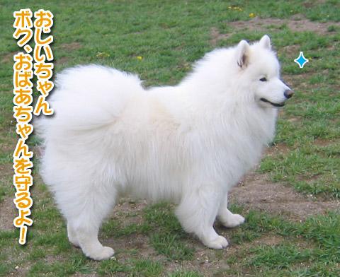 獅子丸5歳になりました〜!_a0044521_10356.jpg
