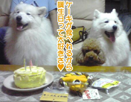 獅子丸5歳になりました〜!_a0044521_141326.jpg