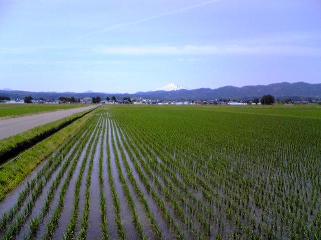 水田農業_f0081443_23111045.jpg