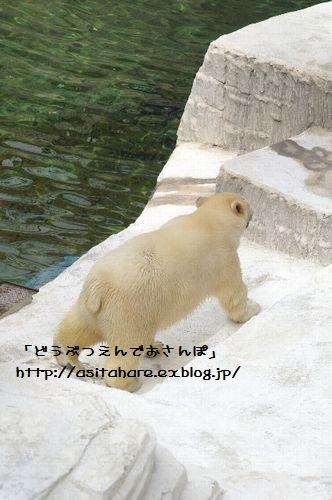 ゴーゴ君 おひろめ!_b0024758_22114310.jpg