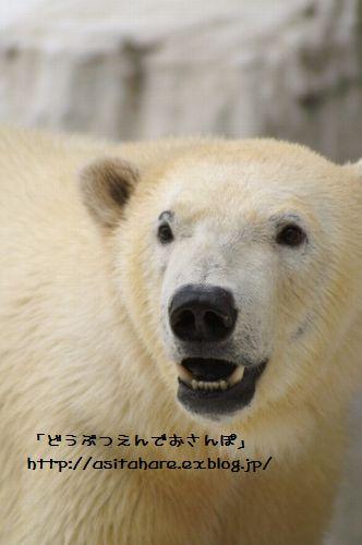 ゴーゴ君 おひろめ!_b0024758_2213127.jpg