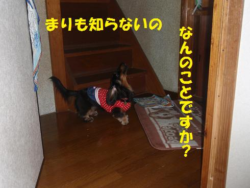 c0151866_2156727.jpg
