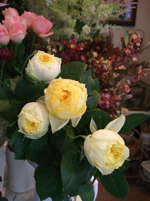 オークリーフ(白花ネムの木)_f0049672_14373647.jpg