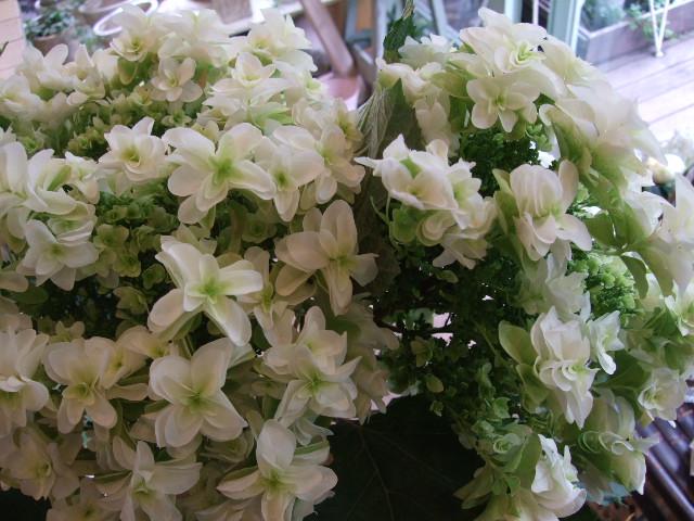 オークリーフ(白花ネムの木)_f0049672_14382793.jpg