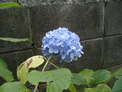 f0130894_20112566.jpg