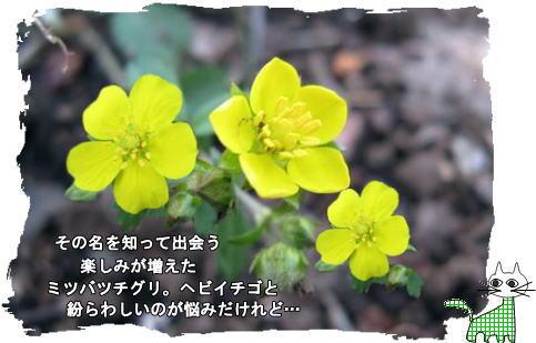 f0137096_19391521.jpg