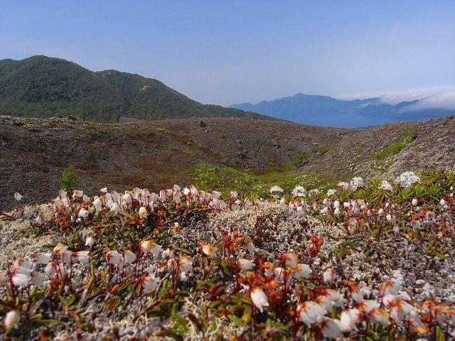 6月18日、樽前山-イワヒゲの写真をメインに-_f0138096_1874242.jpg