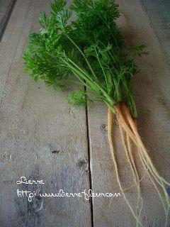 朝採り野菜_e0127625_16553830.jpg