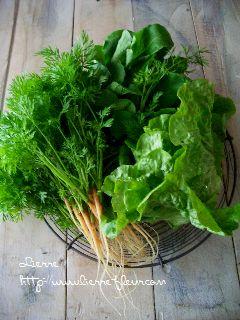 朝採り野菜_e0127625_1734220.jpg