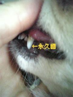 f0148927_18145693.jpg