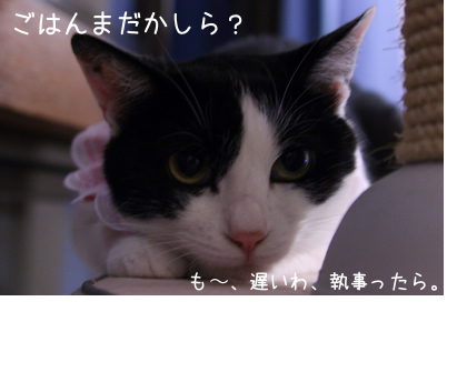f0073833_1019536.jpg