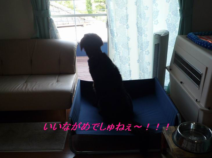 a0104464_10461033.jpg