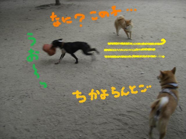 b0137064_18484057.jpg