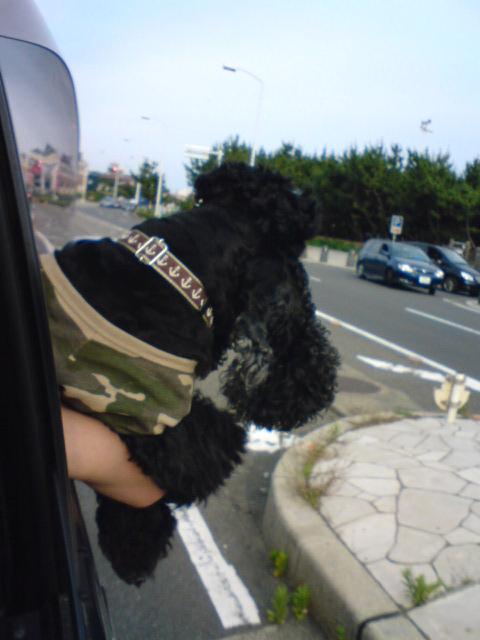 お天気+ドライブ+海♪_f0096569_23345064.jpg