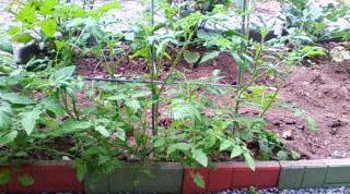 補欠の野菜たち 3_e0127286_1212553.jpg