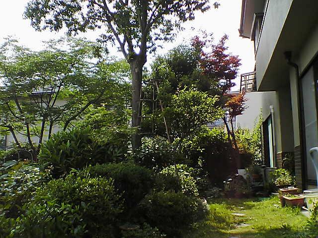 緑、緑、緑。_b0068605_19582843.jpg