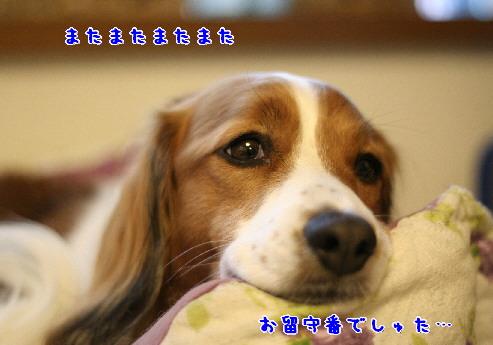 d0013149_752398.jpg