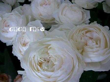 バラがテンコ盛りです・・・_c0130553_19444118.jpg