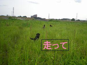 f0109202_21474481.jpg