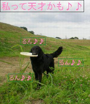 f0109202_2156351.jpg
