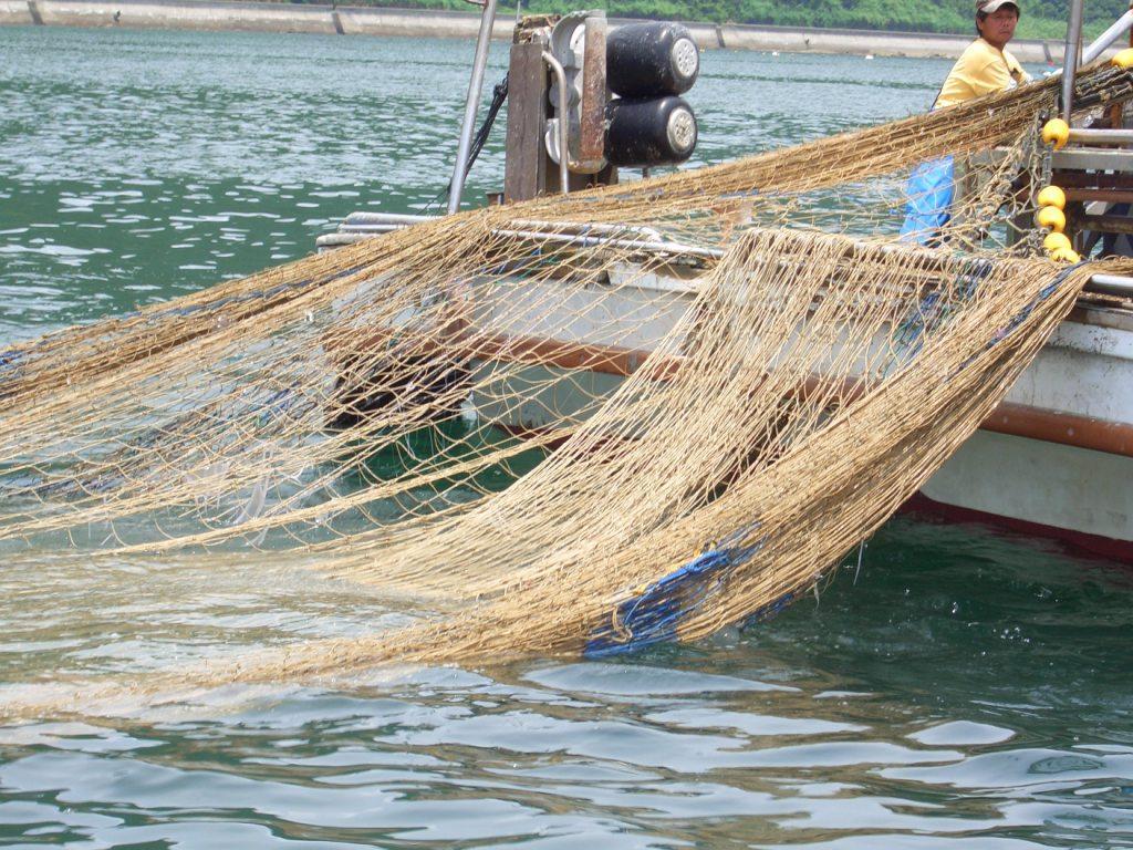 ちりめん漁 その2 : 苓北真珠BLOG