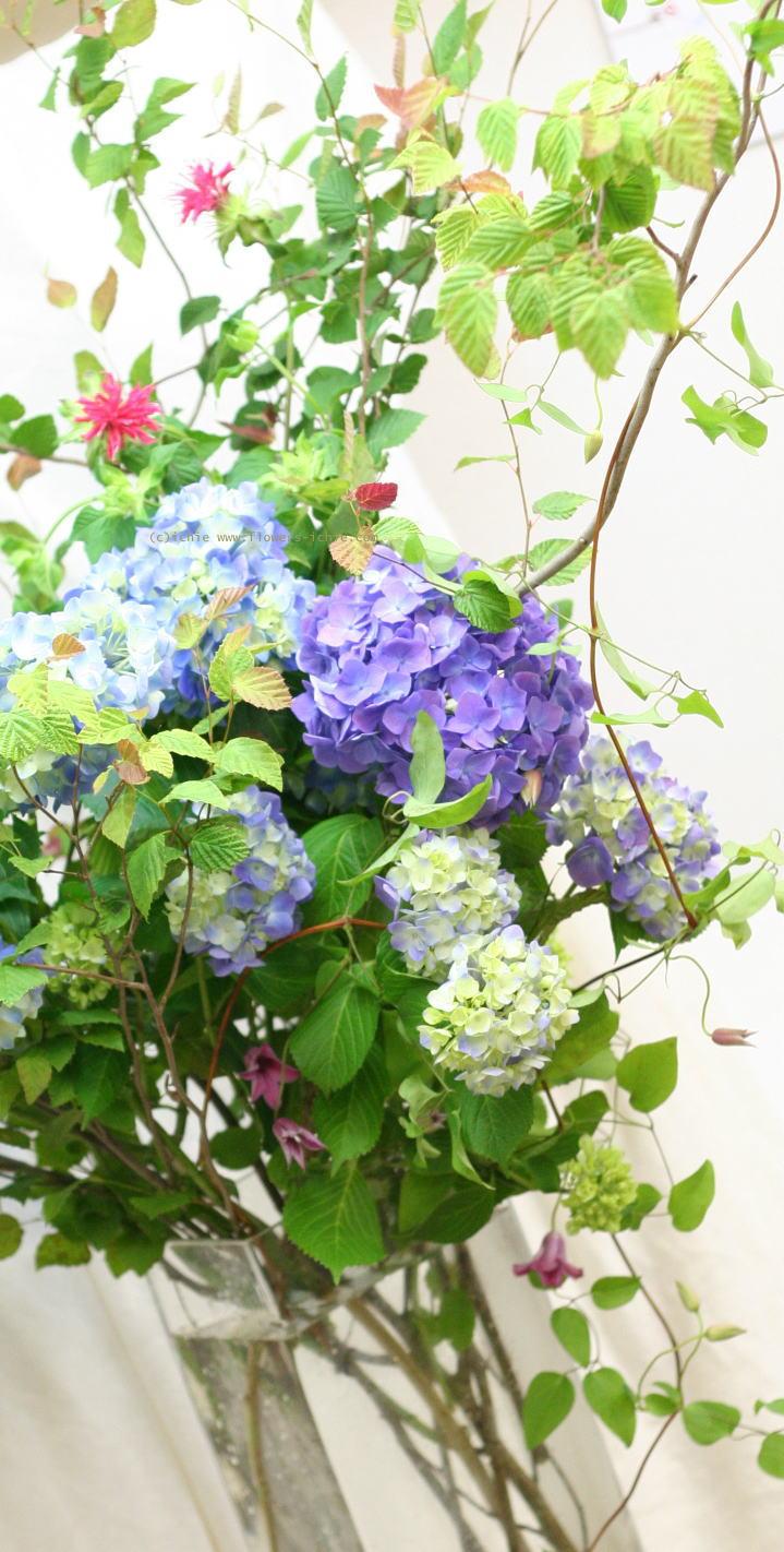単発生花レッスン 7月10日 花瓶に活ける初夏の花報告_a0042928_2144193.jpg