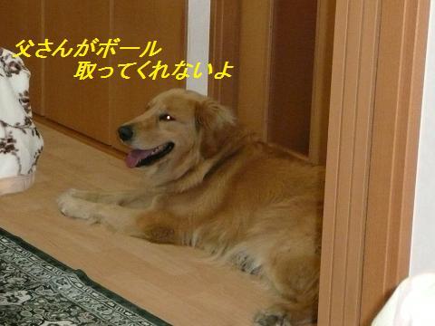 f0114128_222837.jpg