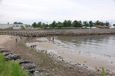 「大阪湾生き物一斉調査」 in  せんなん里海公園_c0108460_22205134.jpg