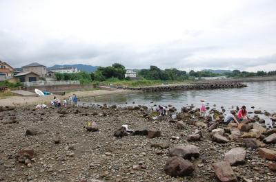 「大阪湾生き物一斉調査」 in  せんなん里海公園_c0108460_22294110.jpg
